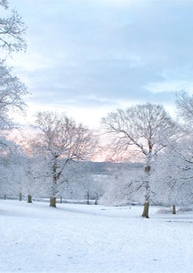 Snow-Covered Trees