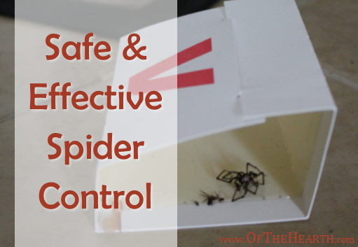 Safe and Effective Spider Control