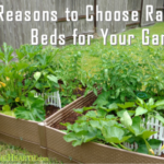 7 Reasons to Choose Raised Beds for Your Garden