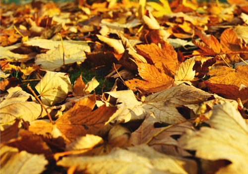 Fall leaves - Fall Scavenger Hunt Printable